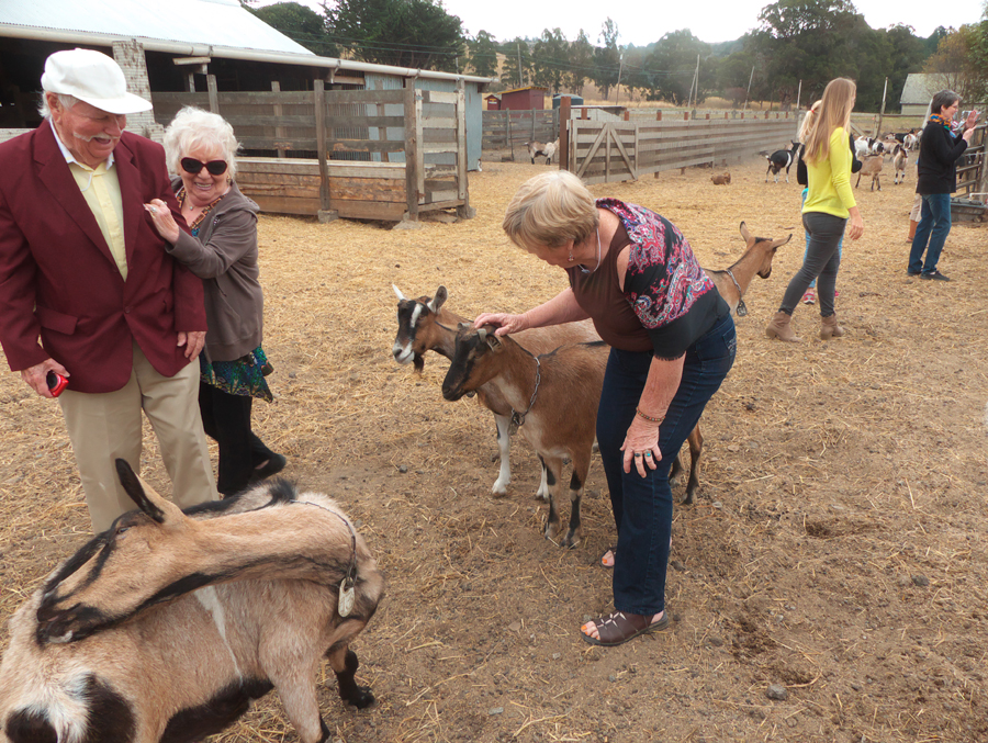 Author pets goats at Harley Farm as other visitors watch