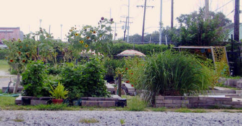 Hollygrove Market and Farm community garden in New Orleans