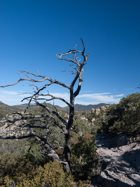 Willcox Arizona mountains with a stark dead tree