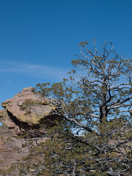 tree and mountains in Willcox Arizona
