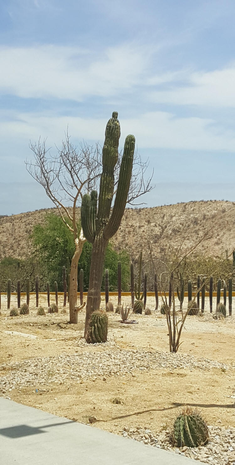 Desert with cactus at Los Cabos, Mexico
