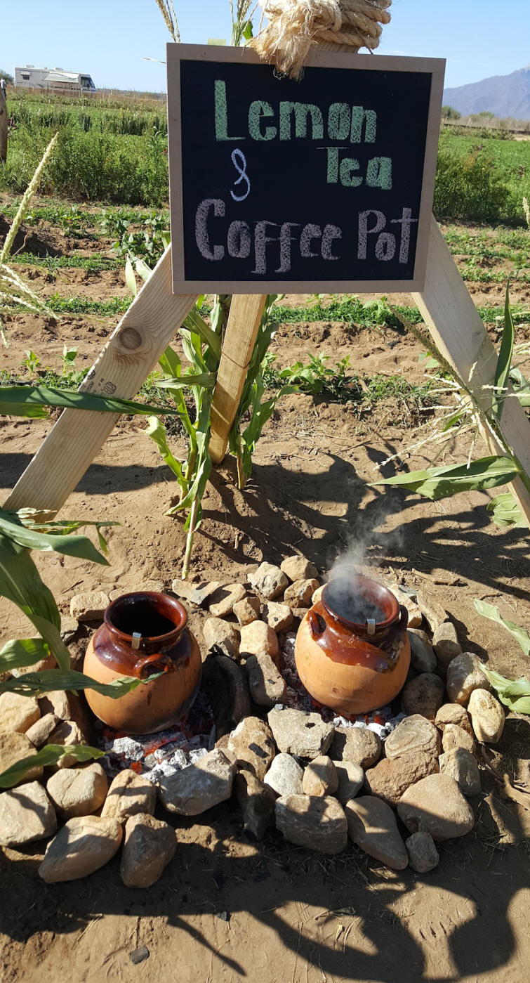 Tea and coffee pots simmering in a fieldat Los Cabos, Mexico