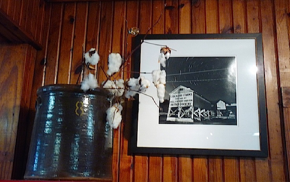 cotton bolls in vase with picture of Dockery Farms