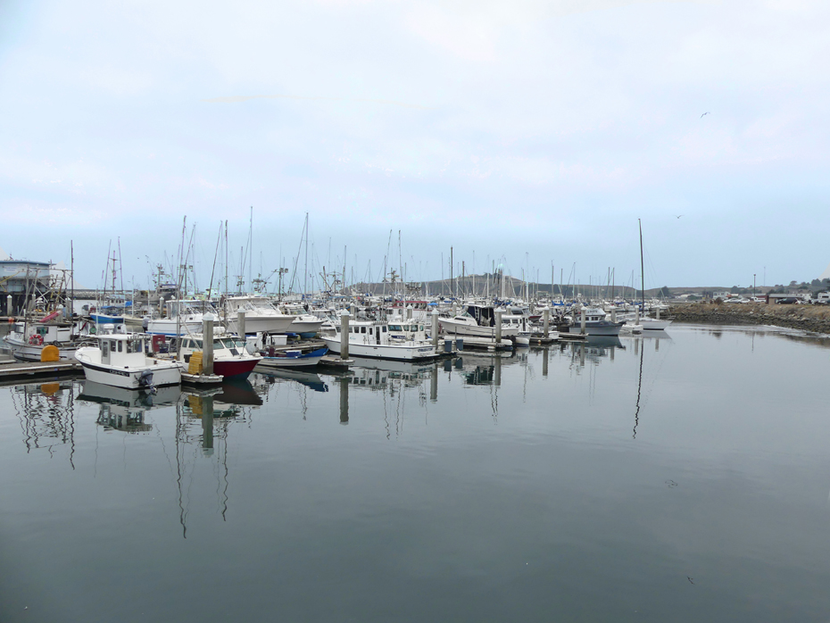 Variety of boats docked at Pillar Point Harbor