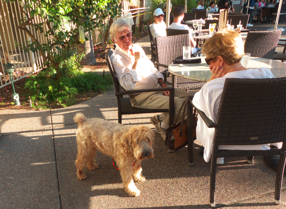 Couple and dog at pool at Dinah;s Garden Hotel
