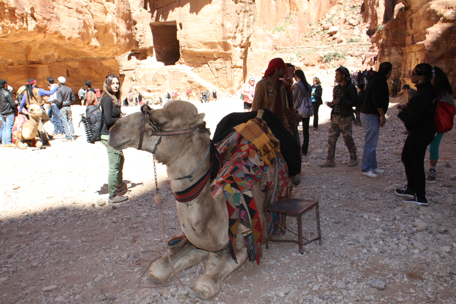 camel and visitors in front of the Treasury at Petra