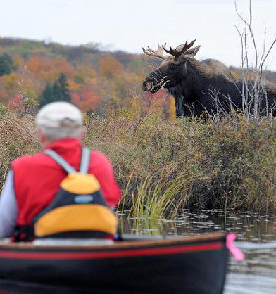 Man in boat sees moos on bank at Wild Center in Adirondacks