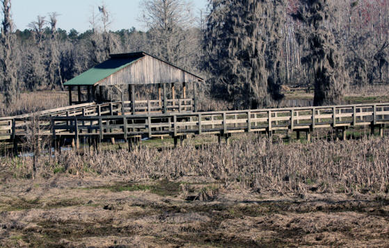 One of the boardwalks at Phinizy Swamp Nature Park in Augusta, GA