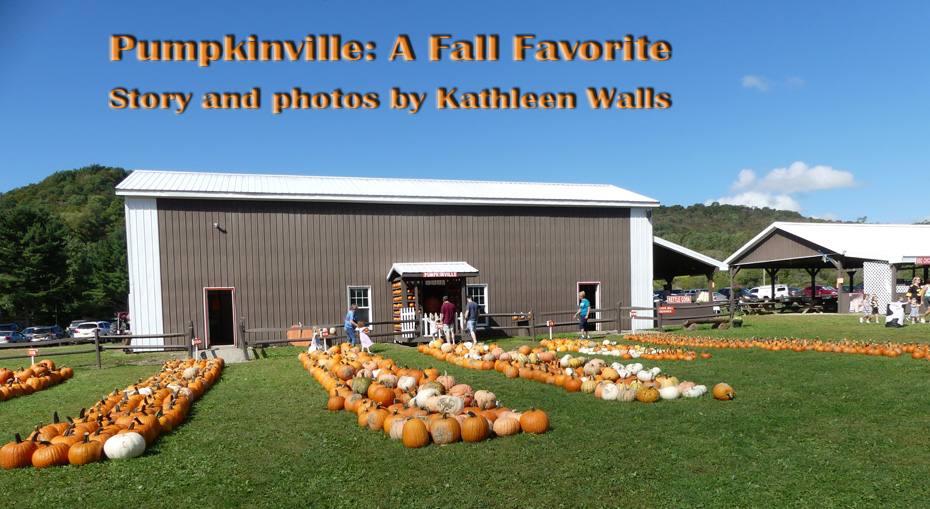 pumpkins outside barn at pumpkinville