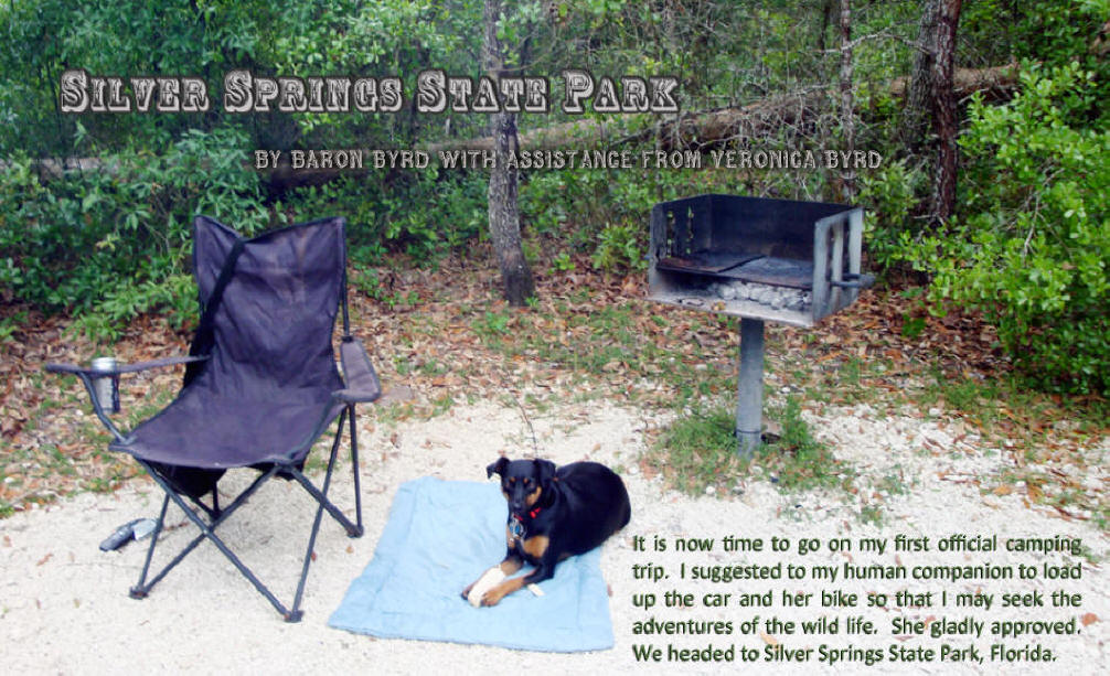 Baron rest on a blanket at the campesite in Silver Springs State Park near Ocala, Flofids