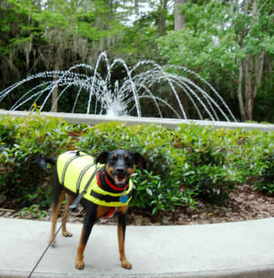 Baron in front of the fountian at Silver Springs State Park near Ocala, Flofids