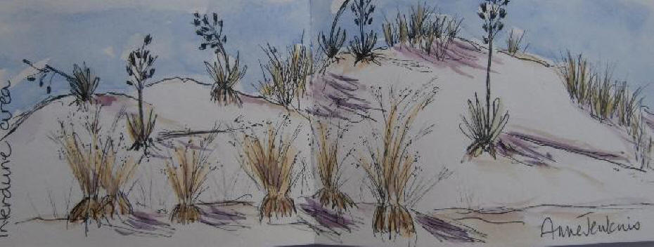 Sketch of Interdune vegetation in the white Sands National Monument