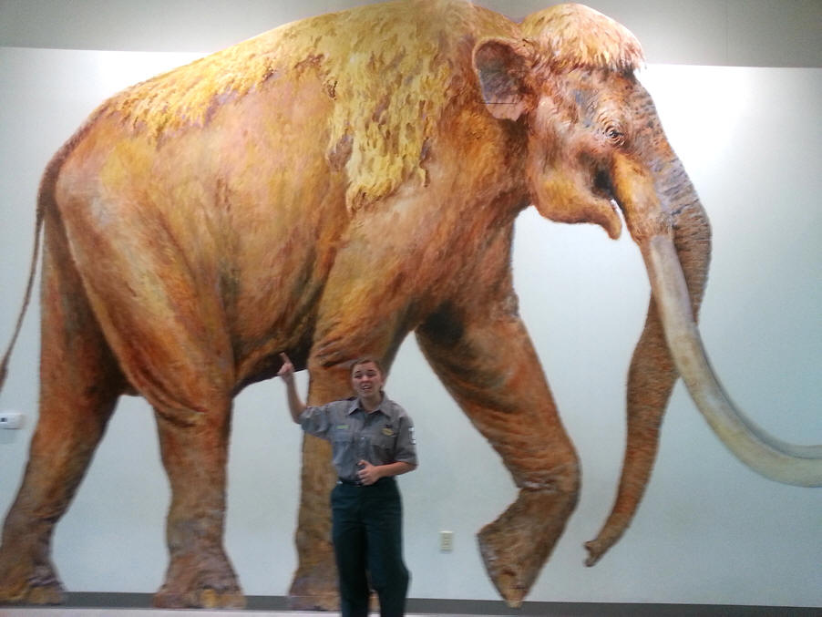 picture of mammoth and guide at Waco Mammoth National Monument