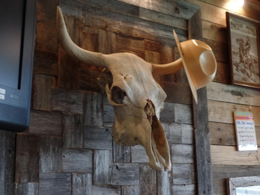 longhorn cow skull at texas ranger Museum in Waco Texas