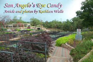 San Angelo's Lily Gardens  used as header photo