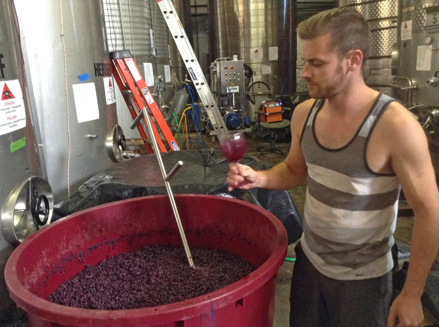 young man tasting wine that is fermenting at Domenico Winery