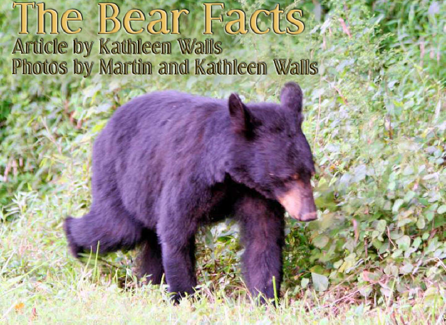 bear walking in woods with title bear facts embossed