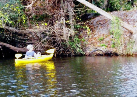 Kathleen Walls approaches alligator on bank of Shell Creek in her kayak