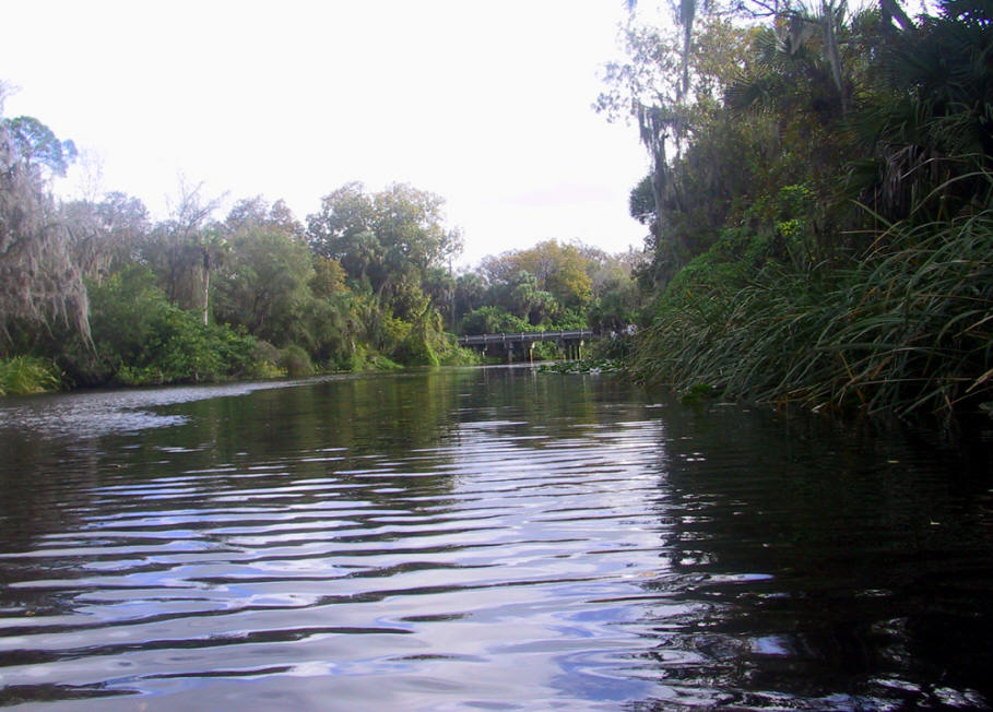 A view of Shell Creek in Charlotte County, Florida